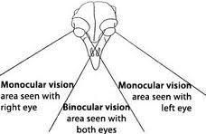 単眼鏡 選び方 おすすめ